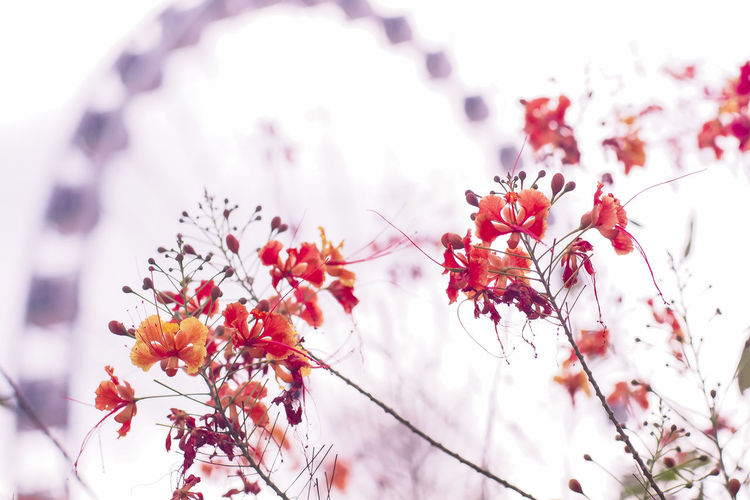 Low angle view of flowering plant against blurred background