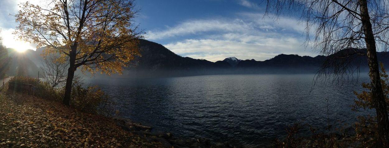 Lake Mist Tree Austria Mondsee Mondsee, Austria