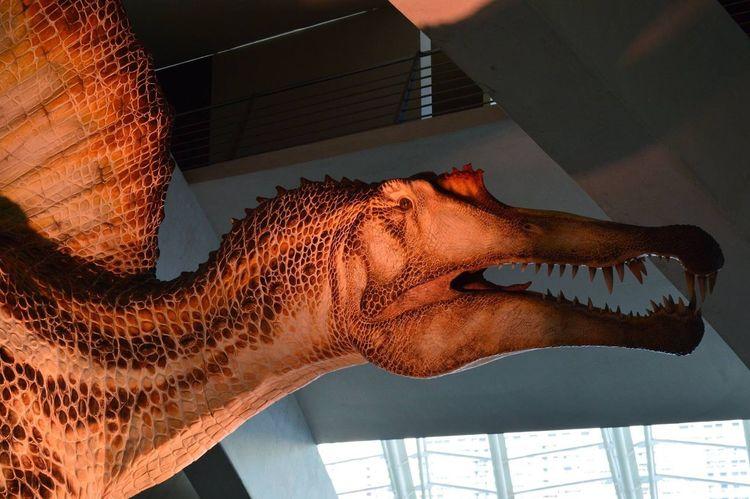 Dinosaur Extinct Animal Representation Indoors  Animal Themes One Animal Close-up Day No People Valencia, Spain Ciudad De Las Artes Y Las Ciencias Calatrava Built Structure