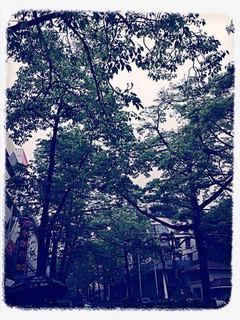 Nature 拈花惹草 Hugging A Tree