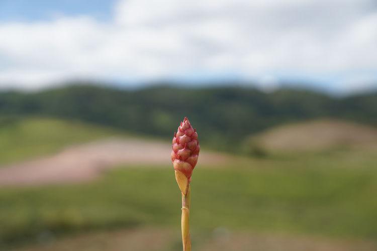 Close-up of red leaf on land