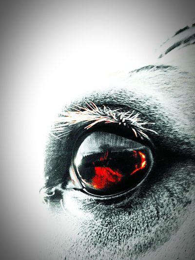Augen Sagen Oft Mehr, Als Worte!! Pferde First Eyeem Photo