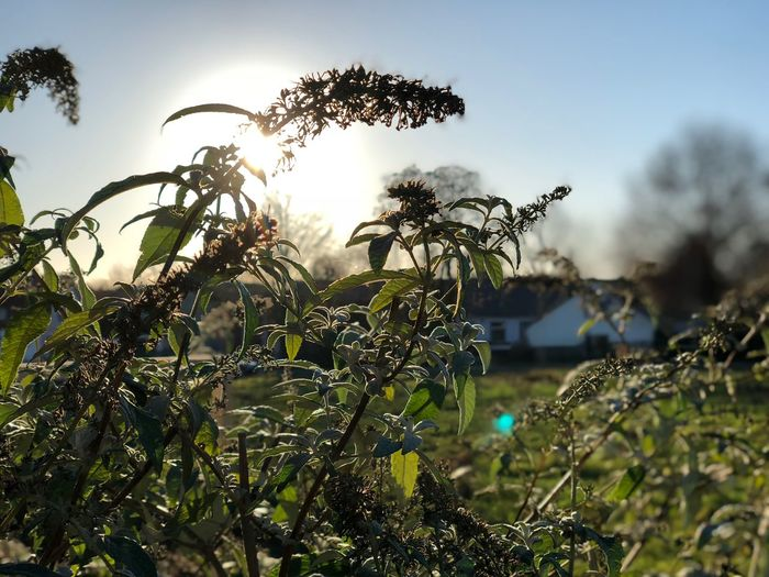 Winter Growth Nature Field Plant No People Outdoors Sky Clear Sky EyeEmNewHere