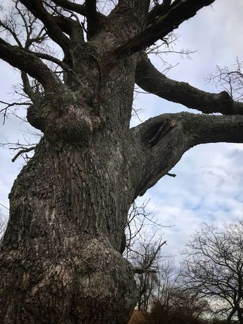 Gnarled Tree Tree Tree Trunk Branch Bare Tree Nature Low Angle View Day Outdoors No People Beauty In Nature Scenics Growth