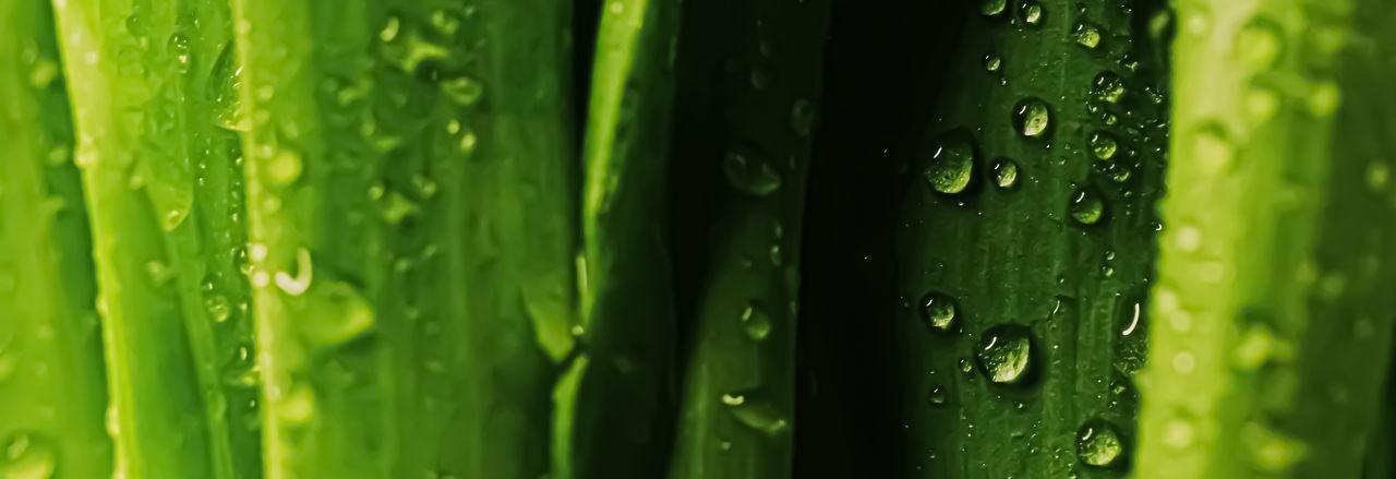 Full frame shot of water drops on green leaf