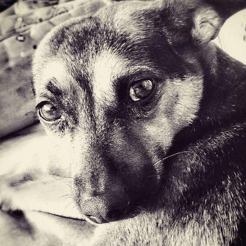 Dog Dog Love Spojrzenie Urok Spokój Odpoczynek