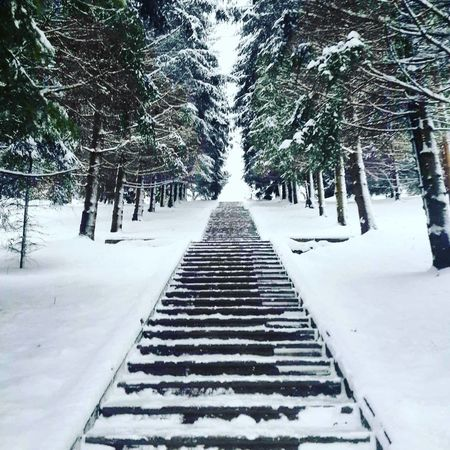 Tree Snow Winter Nature Cold Temperature Beauty In Nature Snowing No People Forest The Way Forward Stairs