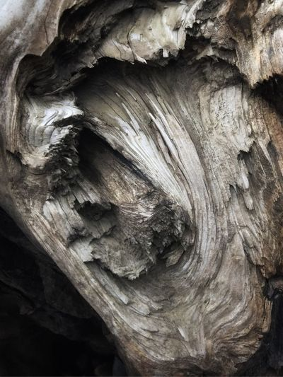 Close-up Textured  Full Frame Rough Backgrounds Tree No People Pattern Wood - Material Natural Pattern Tree Trunk Trunk Outdoors Wood Nature Growth Bark Plant Bark Day