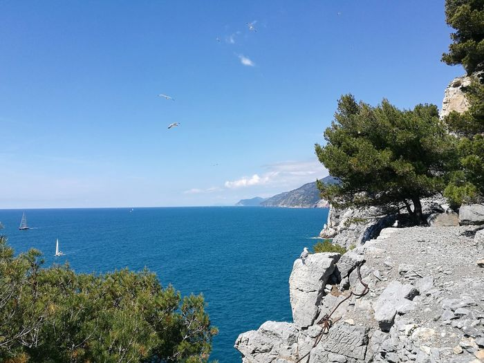 EyeEm Selects Sea Nature Blue Scenics Beach Idyllic Water Beauty In Nature Tree Tranquil Scene Tranquility Outdoors Horizon Over Water No People Day Sky Clear Sky Palmaria Italy Landscape Seagull