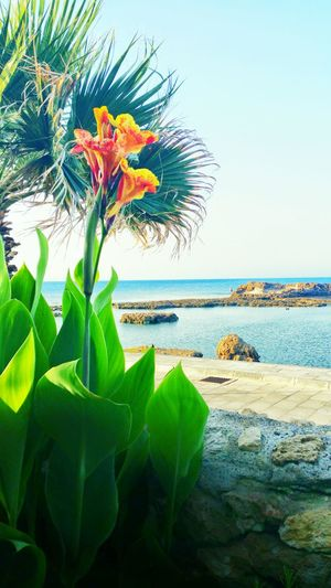 Palmbeach Cyprus PalmHouse Nice Beach Nature Nature Photography OpenEdit Eye4photography  EyeEm Gallery EyeEm Best Shots