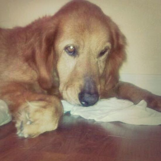 My Rusty!!! I love him so much & He has been my baby boy for 10 yrs...I'm praying for you Rusty!!! I love you!!!!