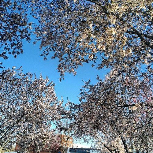 Eski garaj çiçek ağaçlarının kokuları ile mis gibi olmuş içimi ferahlatti.