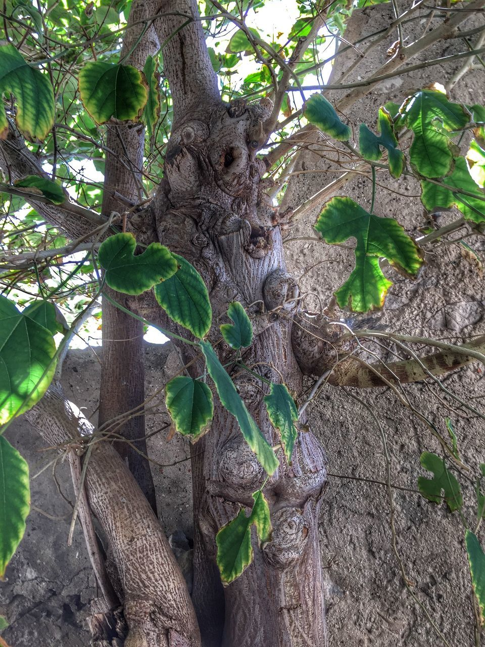 tree, growth, tree trunk, leaf, no people, green color, day, nature, branch, outdoors, low angle view, hanging, plant, beauty in nature, close-up, animal themes, mammal