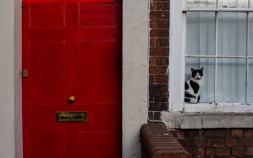 Portrait of cat looking through house window