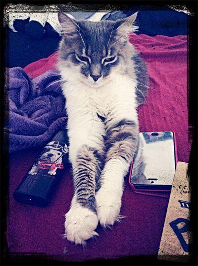 Kana ❤️ My Cat