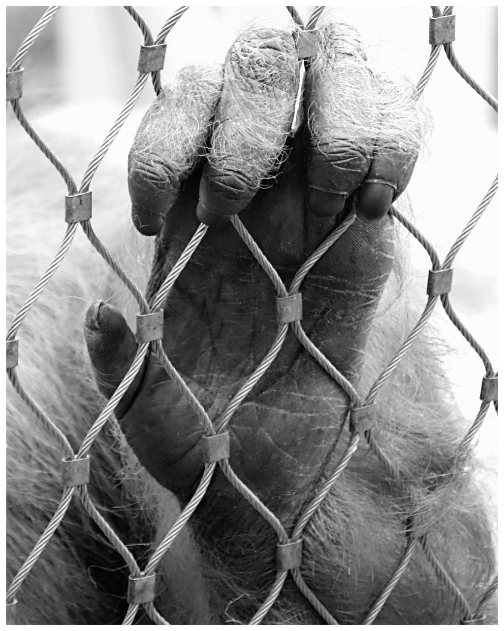 CLOSE-UP OF BARBED WIRE FENCE WITH METAL GRATE IN CHAINLINK