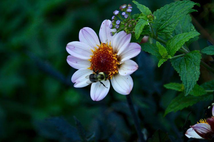 Flor con