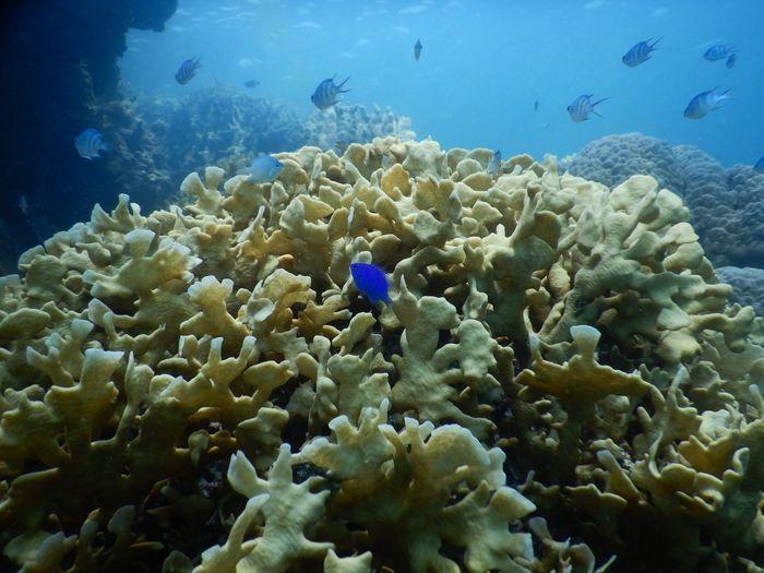 UnderSea Sea Life Water Scuba Diving Sea Underwater Multi Colored Exoticism Coral Colony Sea Anemone Red Sea Ecosystem  Tropical Fish Fiji Clown Fish Shark Soft Coral Atmospheric Saltwater Fish School Of Fish Underwater Diving Coral Colored Ocean Floor Reef