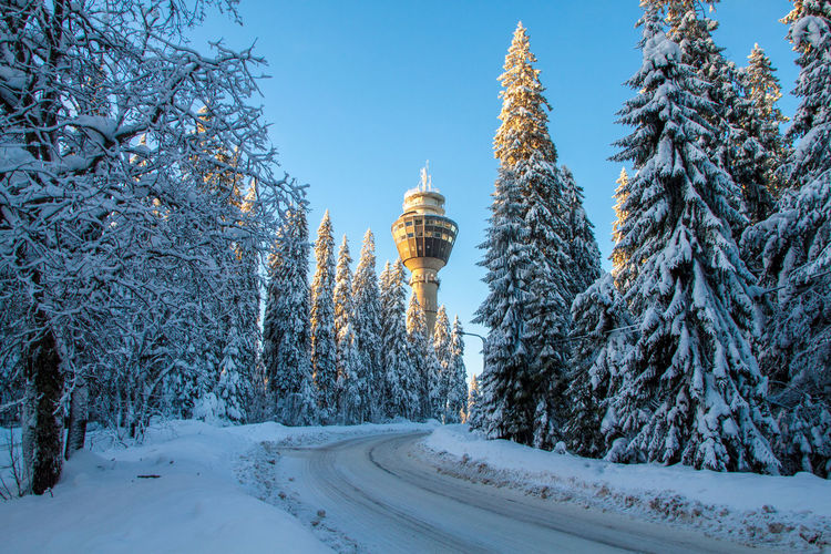 Trees Snowy Trees Tower Puijo Winter Snow Travel Destinations Cold Temperature Tree Nature Outdoors No People Scenics Beauty In Nature Day Sky Politics And Government