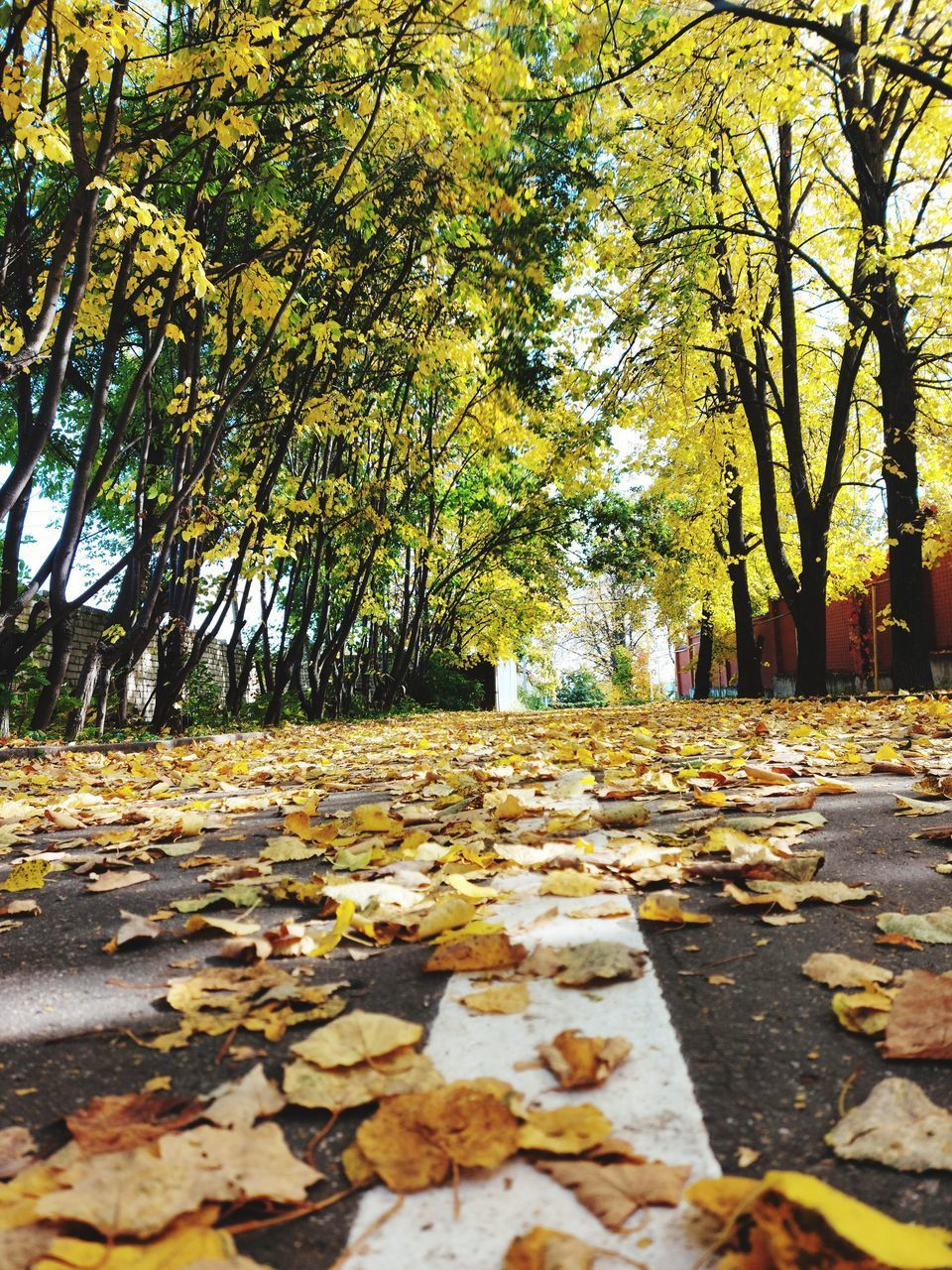 SURFACE LEVEL OF YELLOW LEAVES ON FOOTPATH