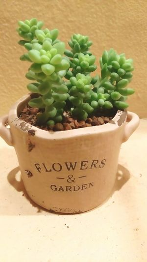 Brown Pot Beauty In Nature Beautiful Freshness Succulents Succulent In Pot Green Color Green Green Green!  Nature Plant Growth Potted Plant Cactus Green Color No People Close-up Day Outdoors