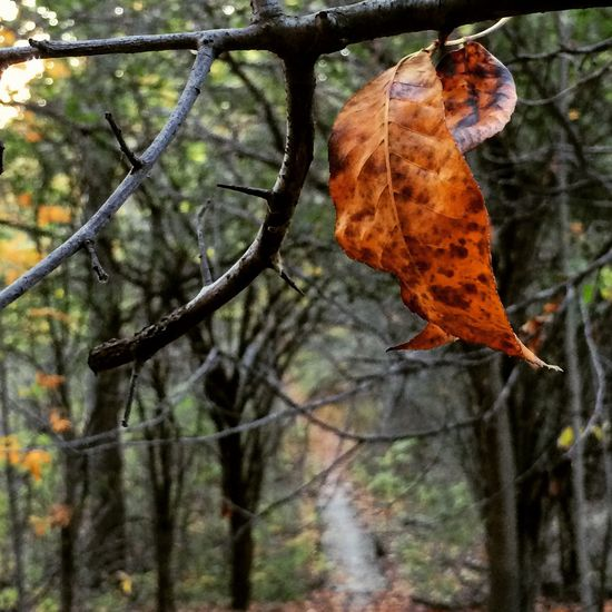 Leaf. Trailwalks Autumn Leaves AWalkInTheWoods Owosso Hopkinstrails Fall_collection Fallen Leaves