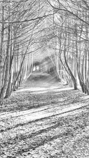 The Haunted Wood (It is actually haunted by a little girl apparently!) Halloween black and white photography blackandwhite black and white beauty in Nature Nature EyeEm EyeEm Nature Lover EyeEm Best Shots EyeEm Sel Halloween Black And White Photography Blackandwhite Black And White Beauty In Nature Nature EyeEm EyeEm Nature Lover EyeEm Best Shots EyeEm Selects Eyem Nature Lovers  Wildlife & Nature Autumn Delicate Beauty Fallen Tree Blackandwhite Tree Branch Foggy Fog Mist Weather Bare Tree Treelined