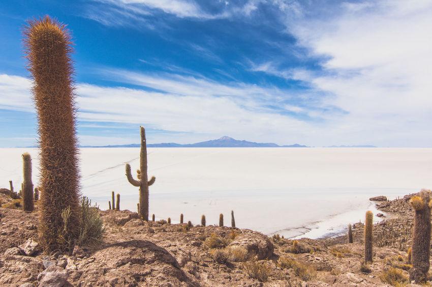 Isla Incahuasi - The Bolivian Salt Flats Arid Climate Cacti Cactus Cactus Cactus Flower Cactus Garden Cactus Paradise Cloud Cloud - Sky Isla Incahuasi Non-urban Scene Plant Scenics Sea Seascape Shore Sky Tokina 11-16 Mm F/2,8 Tranquil Scene Tranquility Uyuni Uyuni - Island Of Salt Uyuni Salt Flat Water Wooden Post