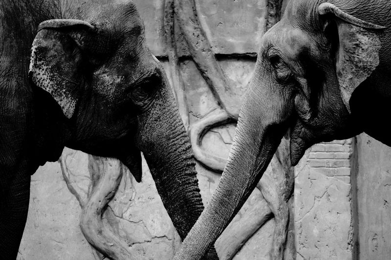 Telling Stories Differently elephant Zoo sad Fine Art Photography