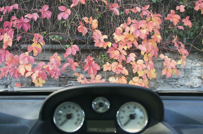 car dashboard and foliage Autumn Car Dashboard Day Foliage Growth Inside Instruments Interior Land Vehicle Leaves Mode Of Transport Nature No People Parked Plants Speedometer Stationary Through The Glass Transportation Vegetation Vehicle View Wall Windscreen