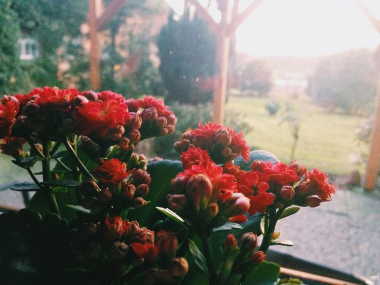Flowers Sunshine Green Almost Winter The Photojournalist - 2017 EyeEm Awards