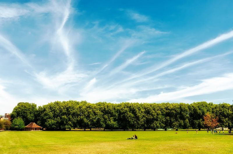 Green lawn in the park Sky Cloud - Sky Tranquil Scene Day Scenics - Nature Outdoors Park Environment Tree Beauty In Nature Grass Landscape Green Color Tranquility Nature Field Land No People Growth Sunlight Plant