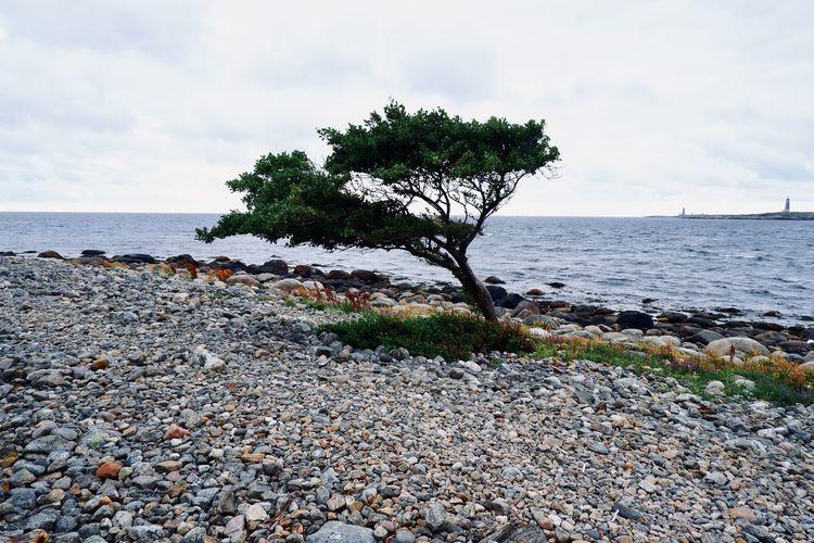 Tree growing on rocks by sea against sky