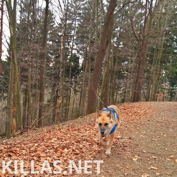 Wald Iserlohn Stadtwald  Hund