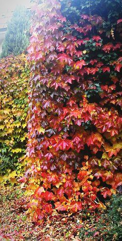 Colorful Autumn Autumn Colors Autumn Leaves Colors Of Autumn Fall Fall Colors Fall Leaves Leaves Colors