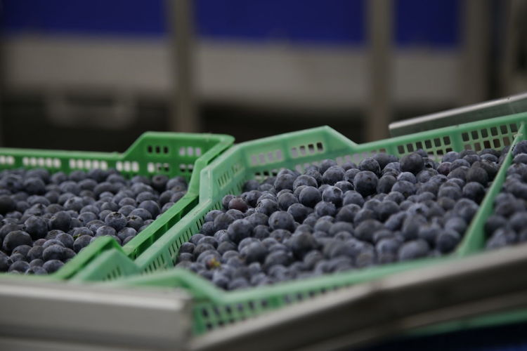 Close-up of blueberries for sale at market stall