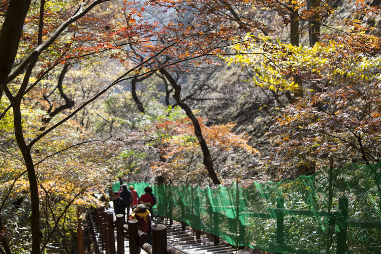 autumn in Maisan Mountain, Jeonju, Jeonbuk, South Korea Adult Autumn Autumn Colors Beauty In Nature Branch Day Fall Full Length Growth Leisure Activity Maisan Men Mountain Nature Outdoors People Real People Rear View Tree Walking Water Women