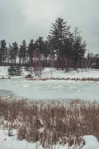 Frozen lake and trees in North America Beauty In Nature Cold Temperature Environment Forest Frozen Frozen Lake Ice Landscape Nature Outdoors Pinaceae Pine Tree Pine Woodland Scenics Sky Snow Tree Tree Area Wilderness Winter