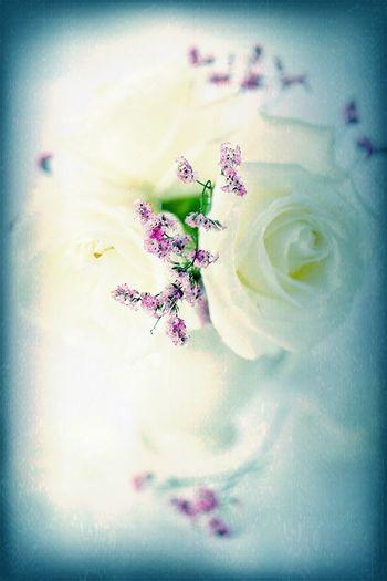 أعشق الورود at Home أعشق الورود