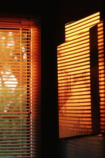 Last bit of the days sun coming through the window.