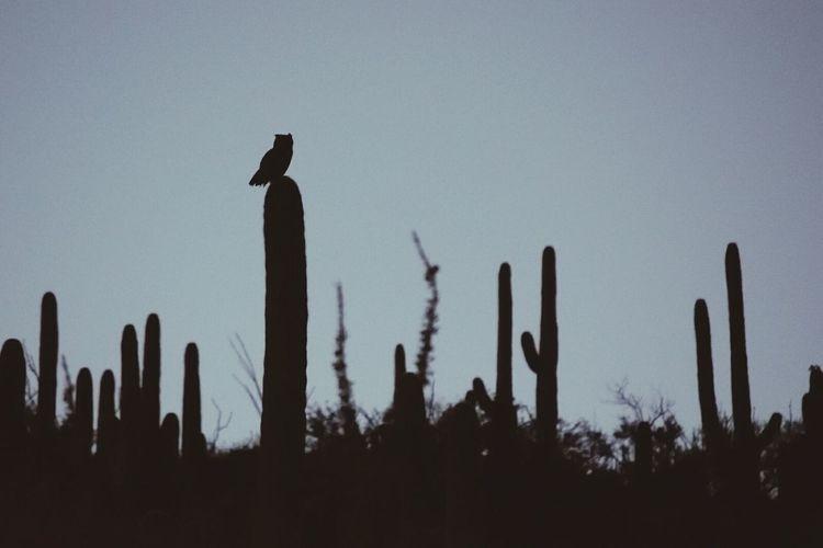 Owl Desert Life Wilderness Sight Tranquility Tranquil Scene Wilderness Area Scenics Remote Calm Idyllic