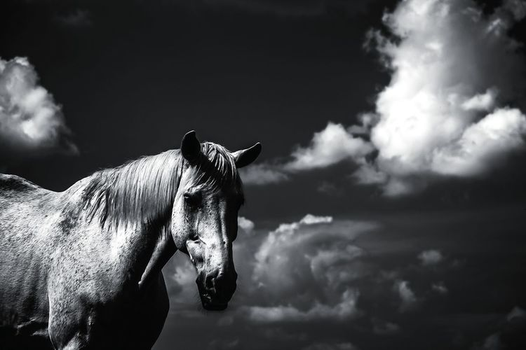 Side view of a horse