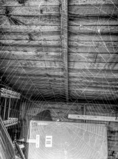 Spider web Store Room