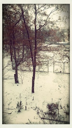 Show Winter