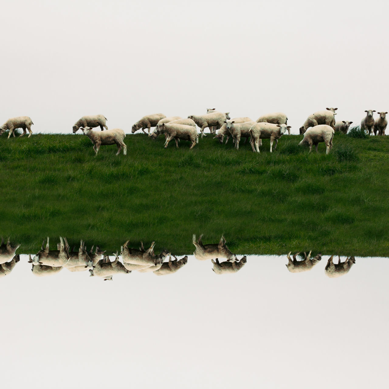 large group of animals