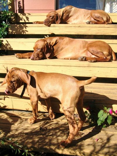 Dogs resting on front stoop