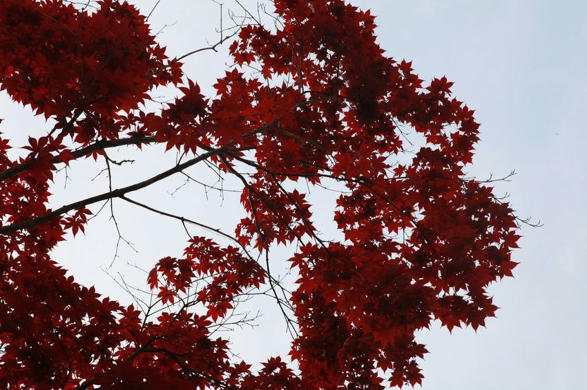 Red Reds Red Wine Redish RedLeaves RedSky Redish :) 바른생태살림원 | be the Nature