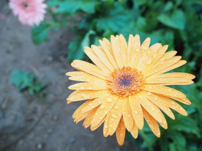 High angle view of flower