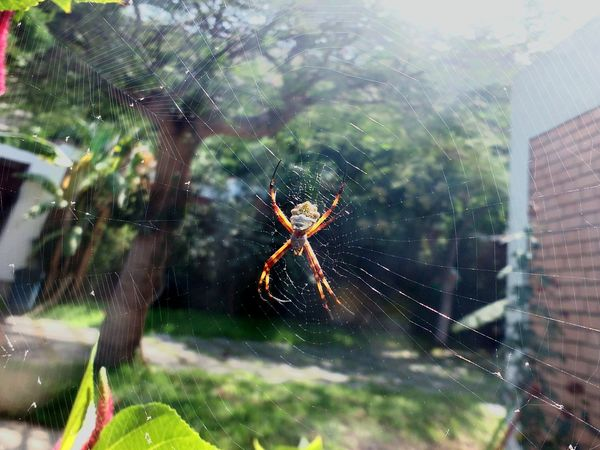 Dangerousful Outdoors Nature Spider Asome