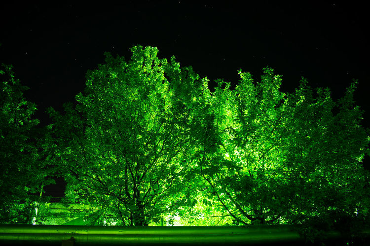 Emerald tree under the starry sky Tree Sky Night A Park Night Park Night Forest Emerald Greenery Brightness Tree Backgrounds Pattern Close-up Sky Green Color Grass Galaxy Infinity HUAWEI Photo Award: After Dark